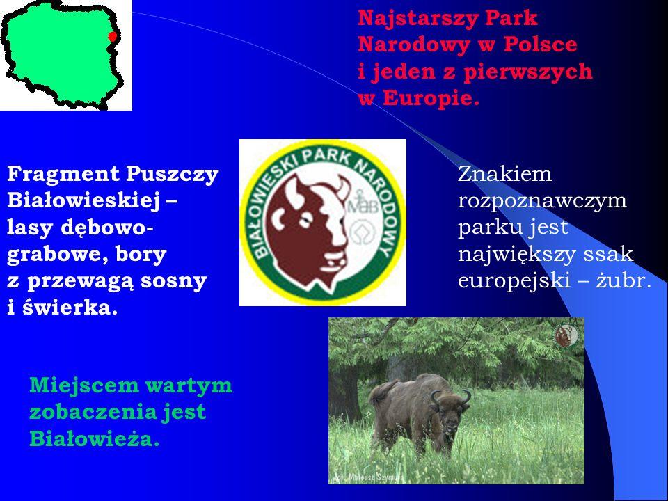 Najstarszy Park Narodowy w Polsce i jeden z pierwszych w Europie. Znakiem rozpoznawczym parku jest największy ssak europejski – żubr. Fragment Puszczy