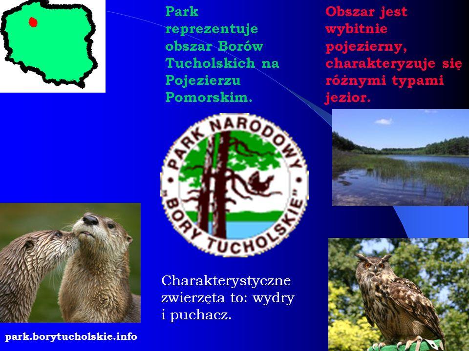 Park reprezentuje obszar Borów Tucholskich na Pojezierzu Pomorskim. Obszar jest wybitnie pojezierny, charakteryzuje się różnymi typami jezior. Charakt