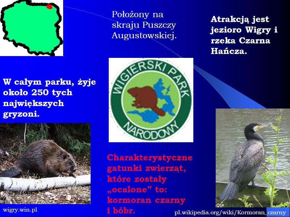 wigry.win.pl Położony na skraju Puszczy Augustowskiej. pl.wikipedia.org/wiki/Kormoran_czarny Charakterystyczne gatunki zwierząt, które zostały ocalone