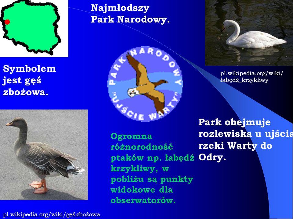 Najmłodszy Park Narodowy. Symbolem jest gęś zbożowa. pl.wikipedia.org/wiki/gęś zbożowa pl.wikipedia.org/wiki/ łabędź_krzykliwy Ogromna różnorodność pt