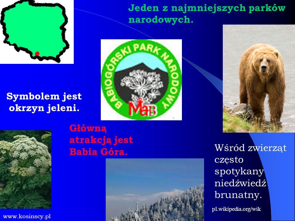 Główną atrakcją jest Babia Góra. Symbolem jest okrzyn jeleni. www.kosinscy.pl Jeden z najmniejszych parków narodowych. Wśród zwierząt często spotykany