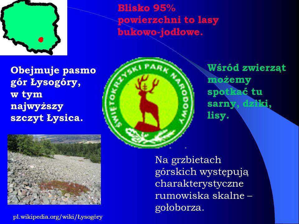 Blisko 95% powierzchni to lasy bukowo-jodłowe. Wśród zwierząt możemy spotkać tu sarny, dziki, lisy. Obejmuje pasmo gór Łysogóry, w tym najwyższy szczy