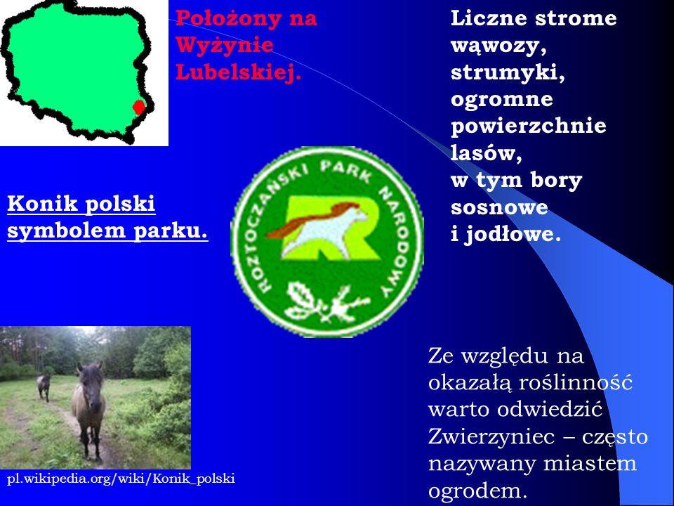 Położony na Wyżynie Lubelskiej. Konik polski symbolem parku. pl.wikipedia.org/wiki/Konik_polski Liczne strome wąwozy, strumyki, ogromne powierzchnie l