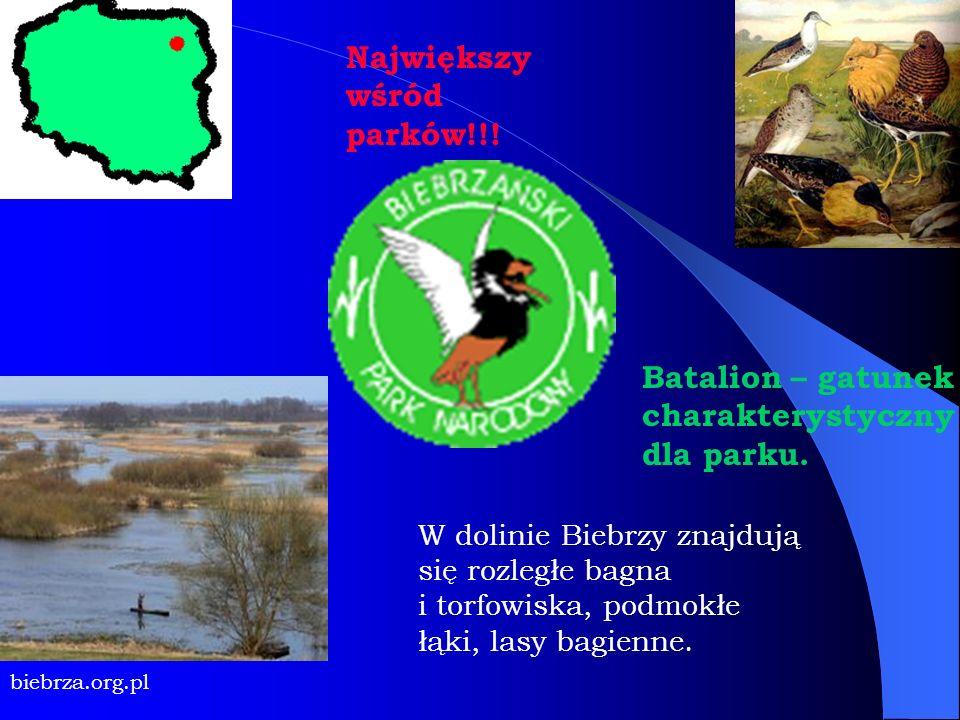 W dolinie Biebrzy znajdują się rozległe bagna i torfowiska, podmokłe łąki, lasy bagienne. biebrza.org.pl Największy wśród parków!!! Batalion – gatunek