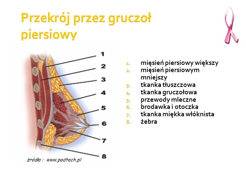 1. mięsień piersiowy większy 2. mięsień piersiowym mniejszy 3. tkanka tłuszczowa 4. tkanka gruczołowa 5. przewody mleczne 6. brodawka i otoczka 7. tka