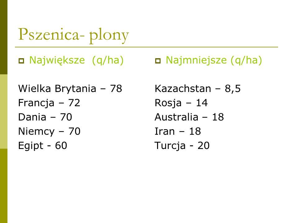 Kukurydza źródło: www.farmer.pl