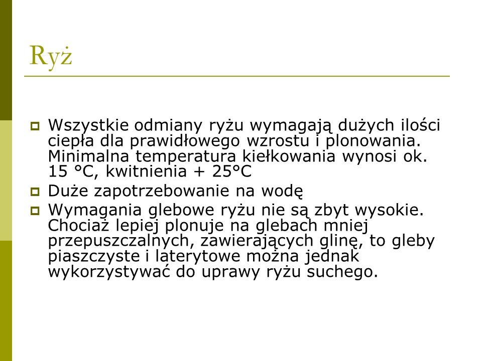 Ryż źródło: www.wiking.edu.pl