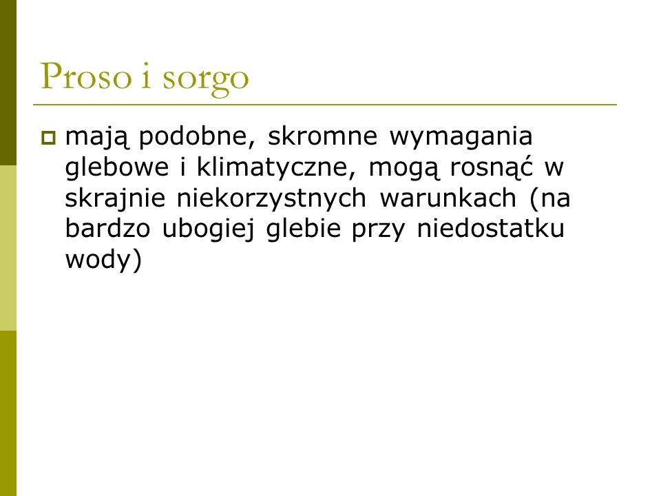 Proso i sorgo źródło: www.wiking.edu.pl