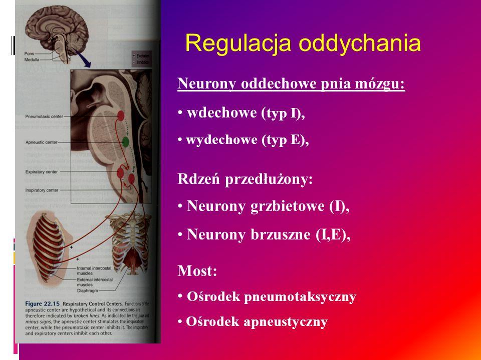 Neurony oddechowe pnia mózgu: wdechowe ( typ I), wydechowe (typ E), Rdzeń przedłużony: Neurony grzbietowe (I), Neurony brzuszne (I,E), Most: Ośrodek p