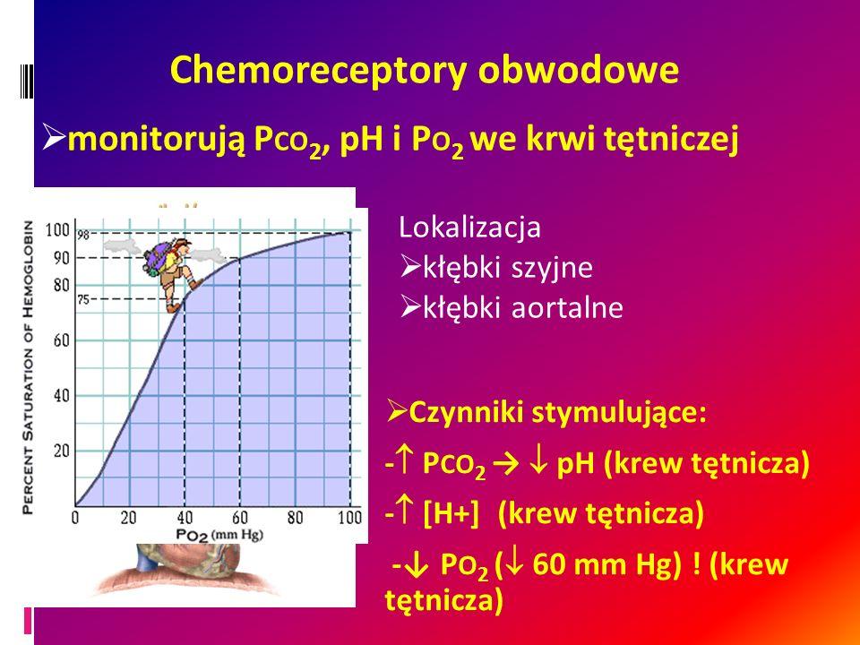 Chemoreceptory obwodowe Czynniki stymulujące: - P CO 2 pH (krew tętnicza) - [H+] (krew tętnicza) - P O 2 ( 60 mm Hg) ! (krew tętnicza) Lokalizacja kłę