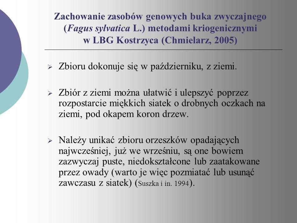 Zachowanie zasobów genowych buka zwyczajnego (Fagus sylvatica L.) metodami kriogenicznymi w LBG Kostrzyca (Chmielarz, 2005) Zbioru dokonuje się w paźd