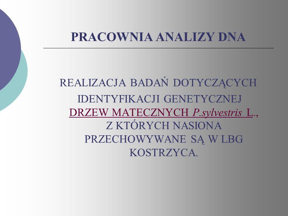 PRACOWNIA ANALIZY DNA REALIZACJA BADAŃ DOTYCZĄCYCH IDENTYFIKACJI GENETYCZNEJ DRZEW MATECZNYCH P.sylvestris L., Z KTÓRYCH NASIONA PRZECHOWYWANE SĄ W LB