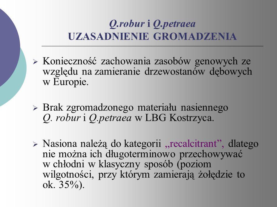 Q.robur i Q.petraea UZASADNIENIE GROMADZENIA Konieczność zachowania zasobów genowych ze względu na zamieranie drzewostanów dębowych w Europie. Brak zg