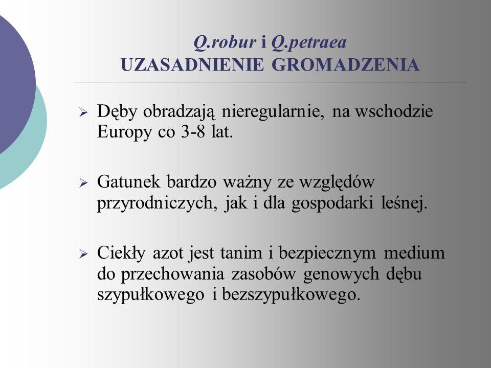 Q.robur i Q.petraea UZASADNIENIE GROMADZENIA Dęby obradzają nieregularnie, na wschodzie Europy co 3-8 lat. Gatunek bardzo ważny ze względów przyrodnic