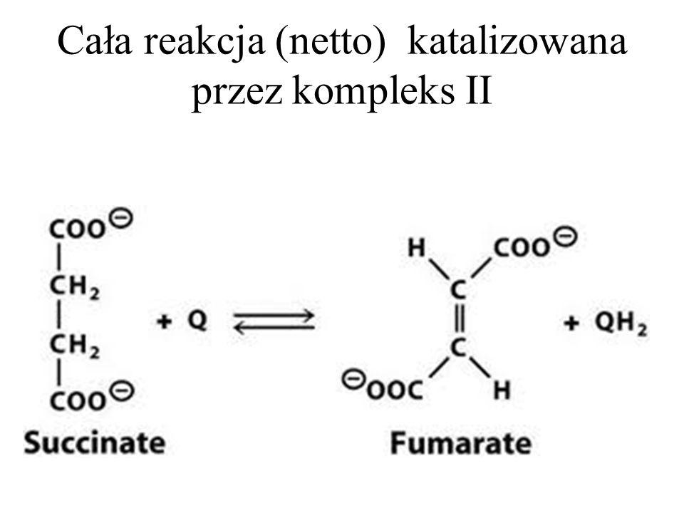 Cała reakcja (netto) katalizowana przez kompleks II