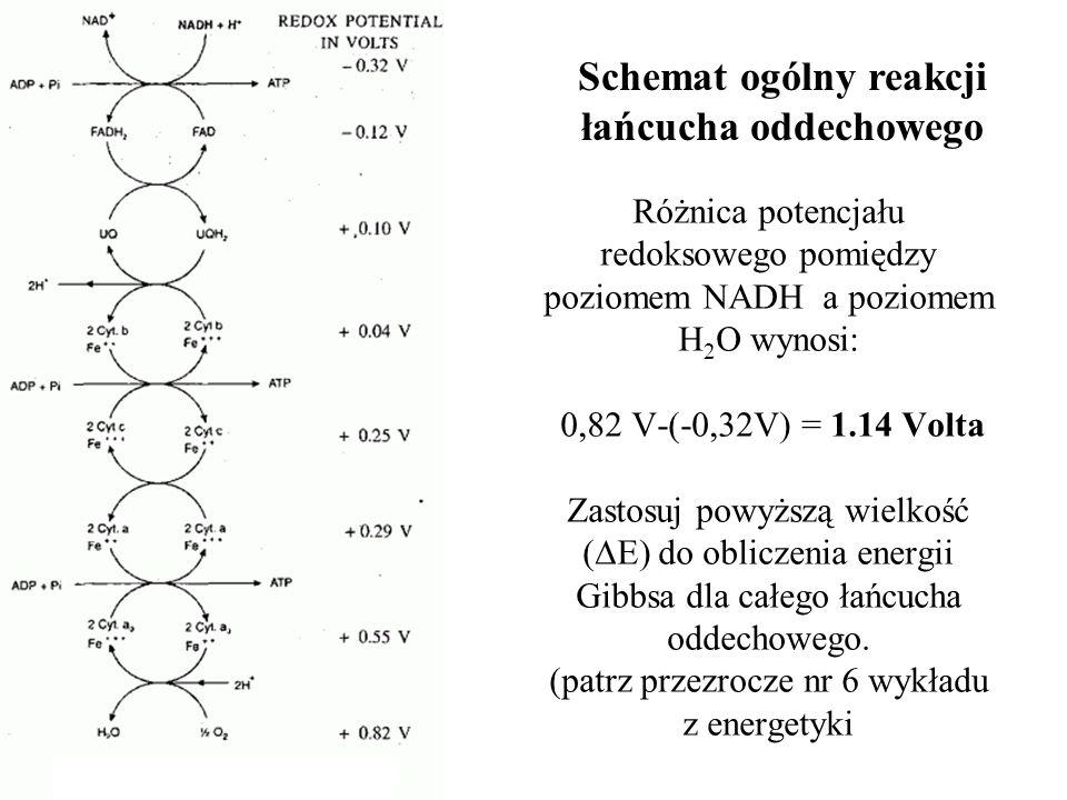 Różnica potencjału redoksowego pomiędzy poziomem NADH a poziomem H 2 O wynosi: 0,82 V-(-0,32V) = 1.14 Volta Zastosuj powyższą wielkość ( E) do oblicze