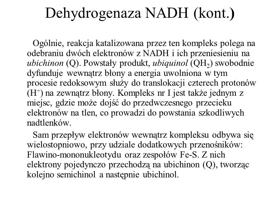 Dehydrogenaza NADH (kont.) Ogólnie, reakcja katalizowana przez ten kompleks polega na odebraniu dwóch elektronów z NADH i ich przeniesieniu na ubichin
