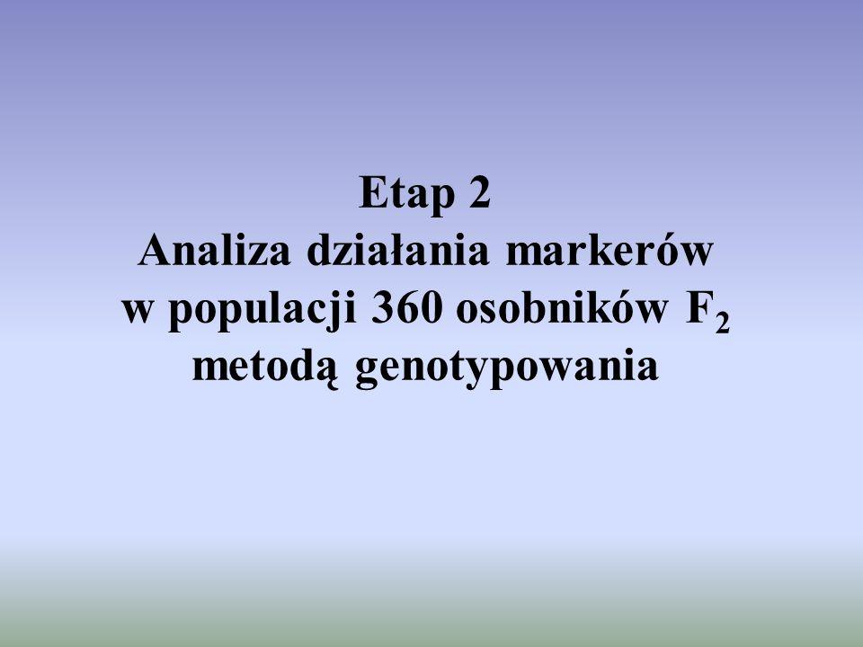 Etap 2 Analiza działania markerów w populacji 360 osobników F 2 metodą genotypowania