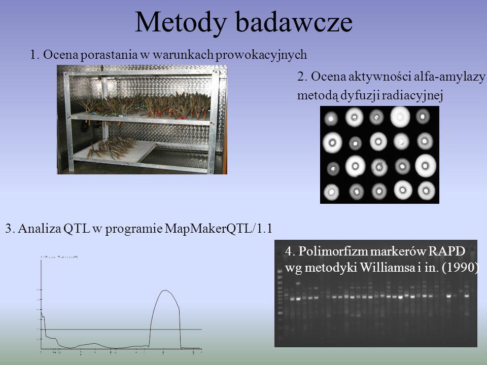 Metody badawcze 1. Ocena porastania w warunkach prowokacyjnych 2. Ocena aktywności alfa-amylazy metodą dyfuzji radiacyjnej 3. Analiza QTL w programie