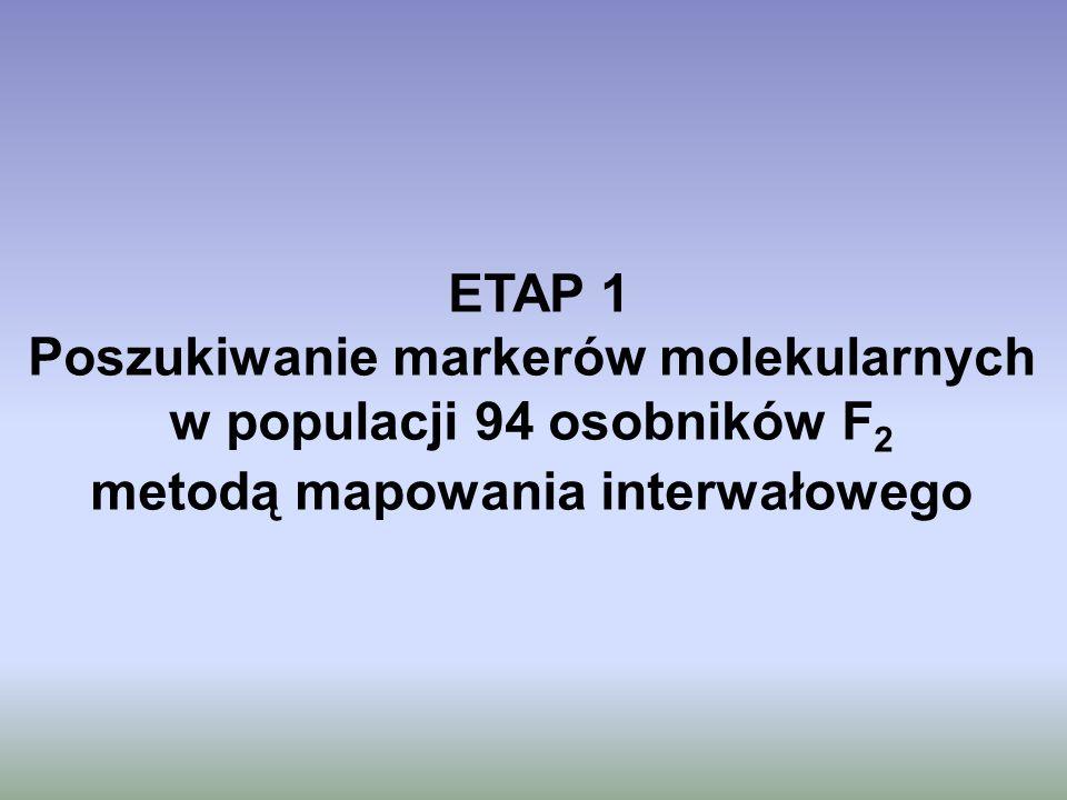 ETAP 1 Poszukiwanie markerów molekularnych w populacji 94 osobników F 2 metodą mapowania interwałowego