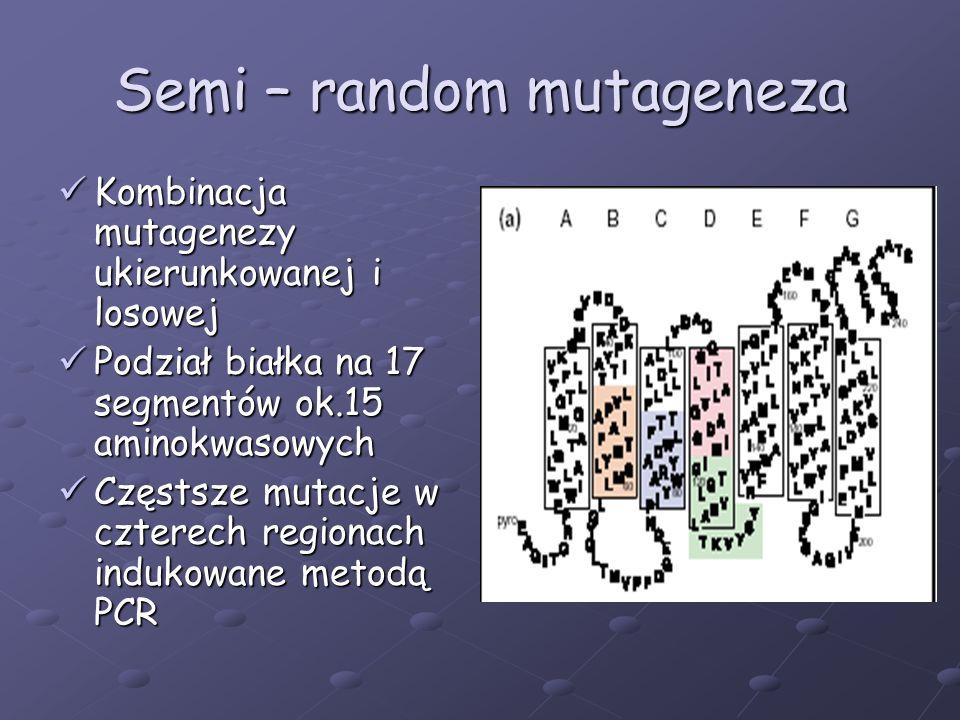 Semi – random mutageneza Kombinacja mutagenezy ukierunkowanej i losowej Kombinacja mutagenezy ukierunkowanej i losowej Podział białka na 17 segmentów