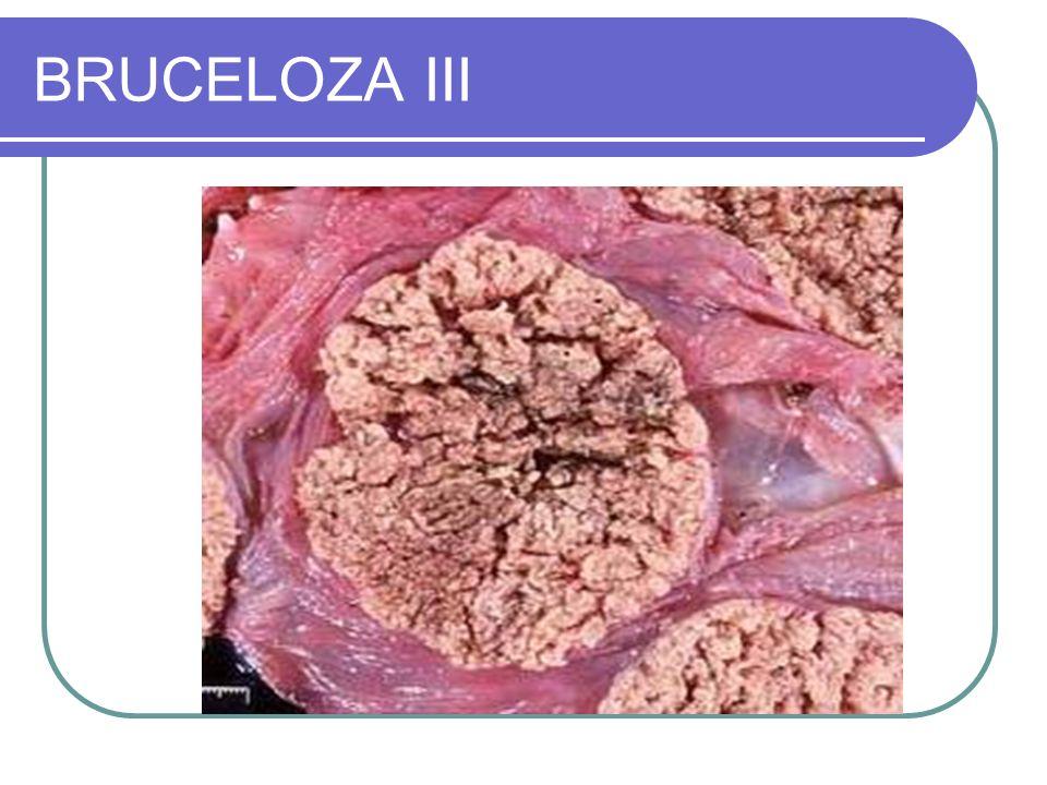 BRUCELOZA III
