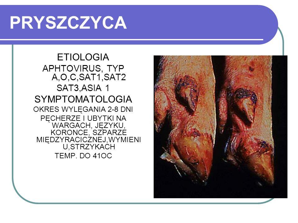 PRYSZCZYCA ETIOLOGIA APHTOVIRUS, TYP A,O,C,SAT1,SAT2 SAT3,ASIA 1 SYMPTOMATOLOGIA OKRES WYLĘGANIA 2-8 DNI PĘCHERZE I UBYTKI NA WARGACH, JĘZYKU, KORONCE