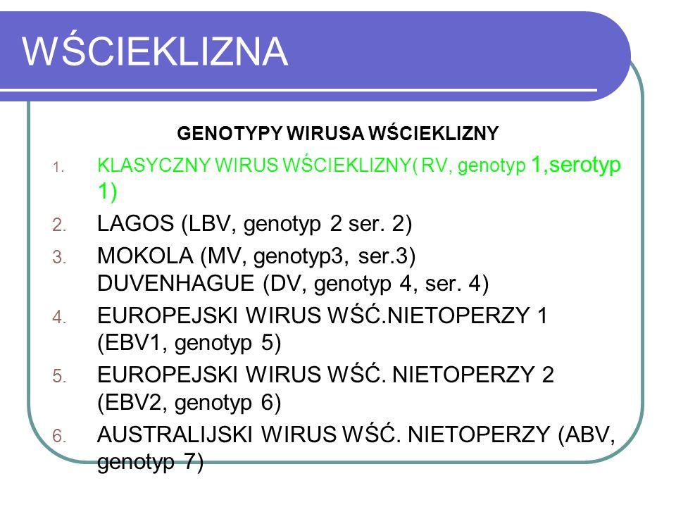 WŚCIEKLIZNA GENOTYPY WIRUSA WŚCIEKLIZNY 1. KLASYCZNY WIRUS WŚCIEKLIZNY( RV, genotyp 1,serotyp 1) 2. LAGOS (LBV, genotyp 2 ser. 2) 3. MOKOLA (MV, genot
