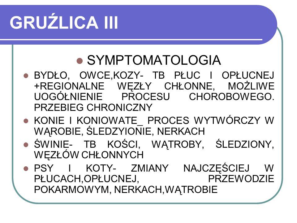 GRUŹLICA III SYMPTOMATOLOGIA BYDŁO, OWCE,KOZY- TB PŁUC I OPŁUCNEJ +REGIONALNE WĘZŁY CHŁONNE, MOŻLIWE UOGÓŁNIENIE PROCESU CHOROBOWEGO. PRZEBIEG CHRONIC