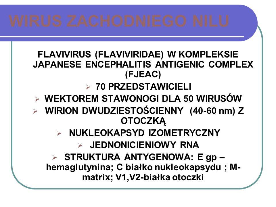 WIRUS ZACHODNIEGO NILU FLAVIVIRUS (FLAVIVIRIDAE) W KOMPLEKSIE JAPANESE ENCEPHALITIS ANTIGENIC COMPLEX (FJEAC) 70 PRZEDSTAWICIELI WEKTOREM STAWONOGI DL
