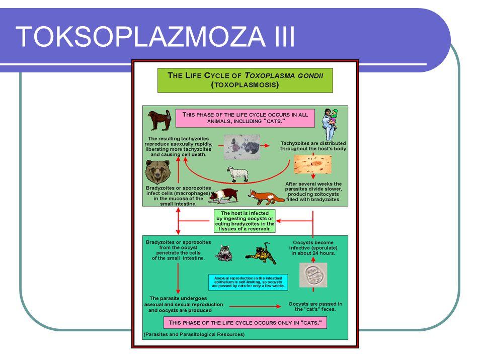 TOKSOPLAZMOZA III