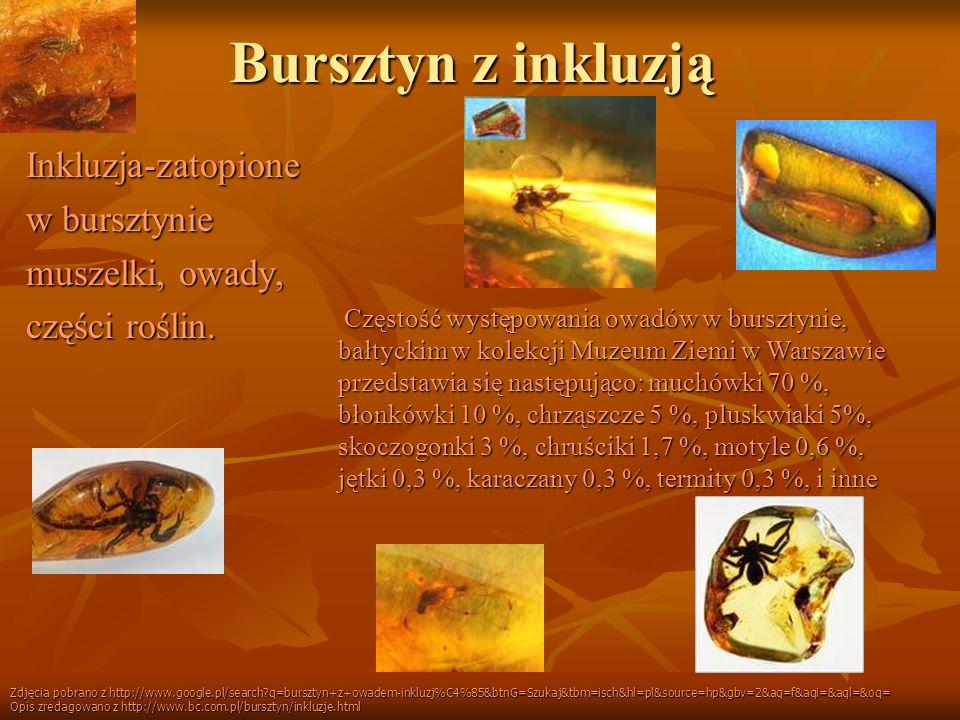 Bursztyn z inkluzją Inkluzja-zatopione w bursztynie muszelki, owady, części roślin. Częstość występowania owadów w bursztynie, bałtyckim w kolekcji Mu