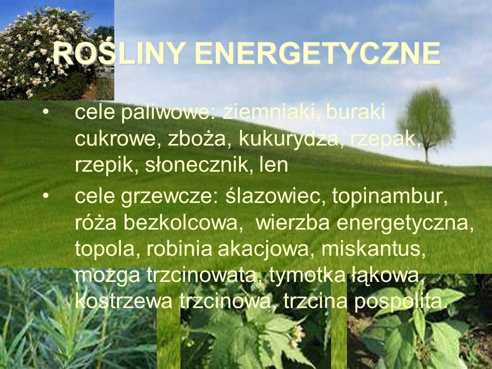 ROŚLINY ENERGETYCZNE cele paliwowe: ziemniaki, buraki cukrowe, zboża, kukurydza, rzepak, rzepik, słonecznik, len cele grzewcze: ślazowiec, topinambur,