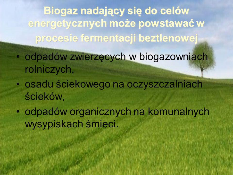 Biogaz nadający się do celów energetycznych może powstawać w procesie fermentacji beztlenowej odpadów zwierzęcych w biogazowniach rolniczych, osadu śc