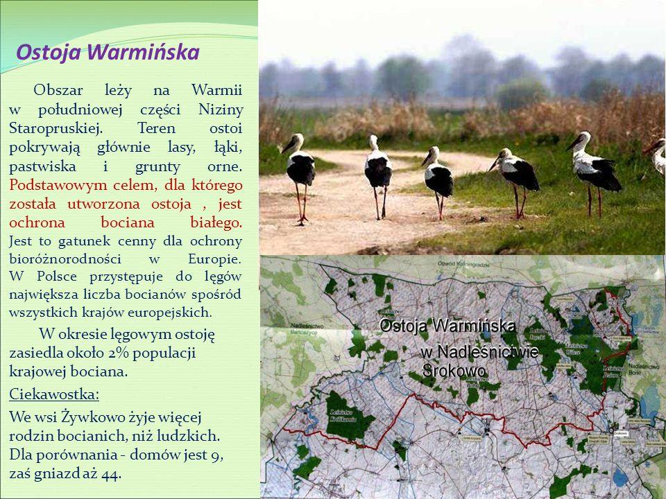 Ostoja Warmińska Obszar leży na Warmii w południowej części Niziny Staropruskiej. Teren ostoi pokrywają głównie lasy, łąki, pastwiska i grunty orne. P