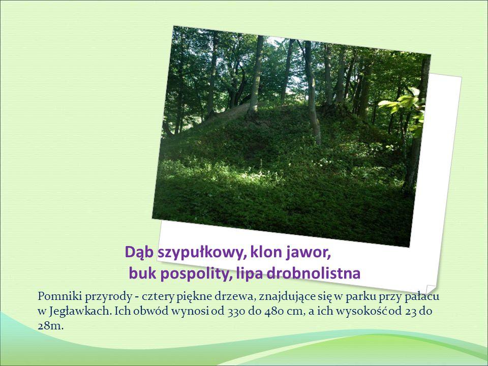 Pomniki przyrody - cztery piękne drzewa, znajdujące się w parku przy pałacu w Jegławkach. Ich obwód wynosi od 330 do 480 cm, a ich wysokość od 23 do 2