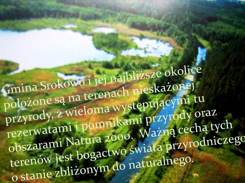 Ostoja Jezioro Oświn i okolice Występuje tu co najmniej 29 gatunków ptaków z Załącznika I Dyrektywy Ptasiej oraz 7 gatunków z Polskiej Czerwonej Księgi.