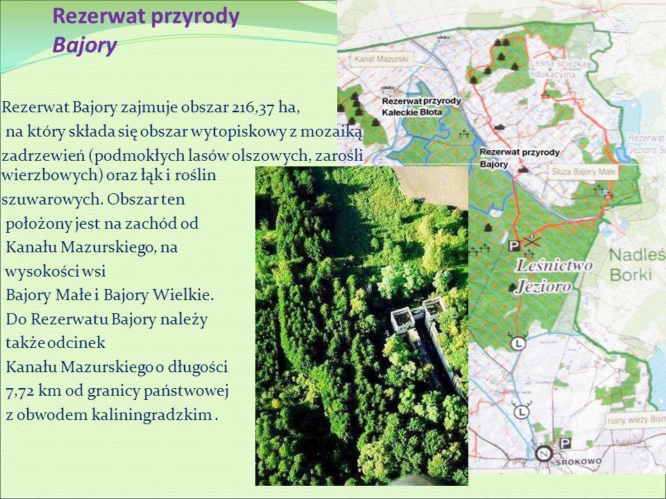 Rezerwat przyrody Bajory Rezerwat Bajory zajmuje obszar 216,37 ha, na który składa się obszar wytopiskowy z mozaiką zadrzewień (podmokłych lasów olszo
