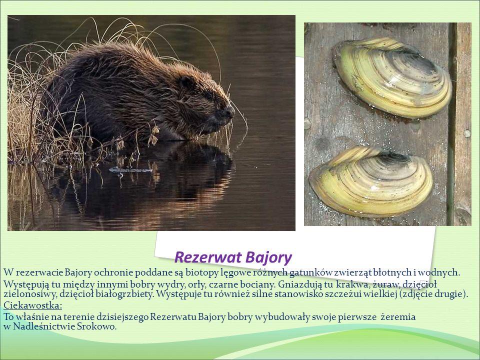 Rezerwat Bajory W rezerwacie Bajory ochronie poddane są biotopy lęgowe różnych gatunków zwierząt błotnych i wodnych. Występują tu między innymi bobry