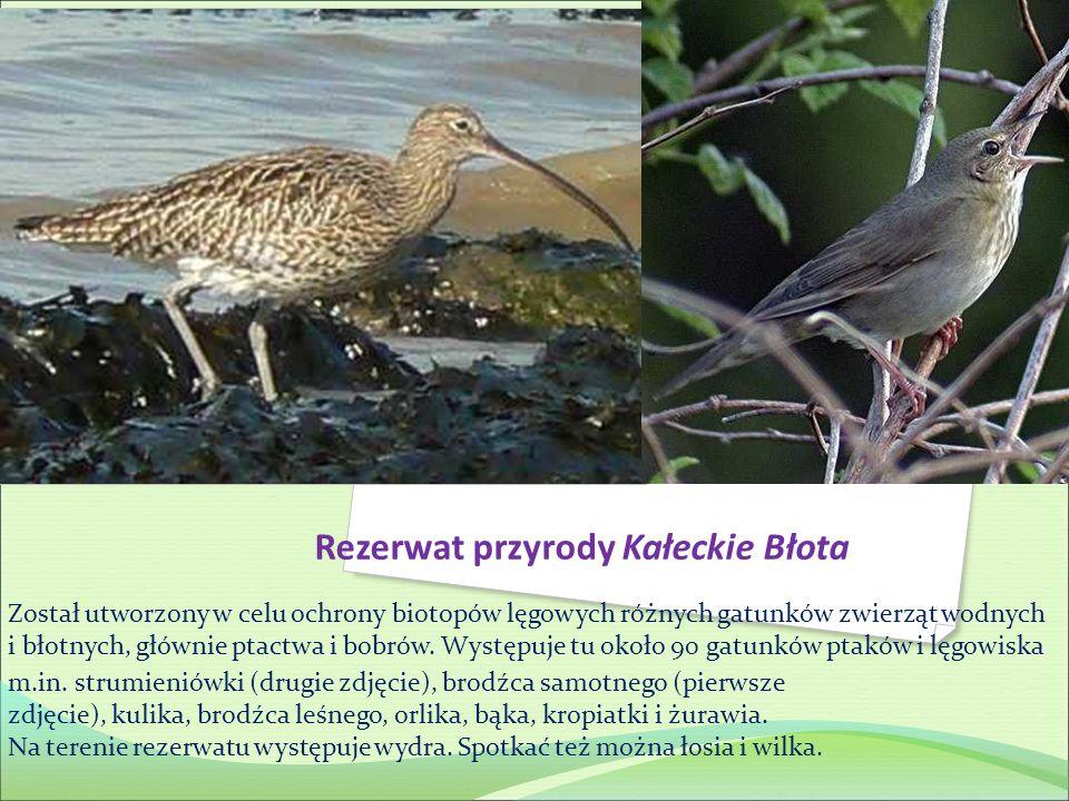 Rezerwat przyrody Kałeckie Błota Został utworzony w celu ochrony biotopów lęgowych różnych gatunków zwierząt wodnych i błotnych, głównie ptactwa i bob