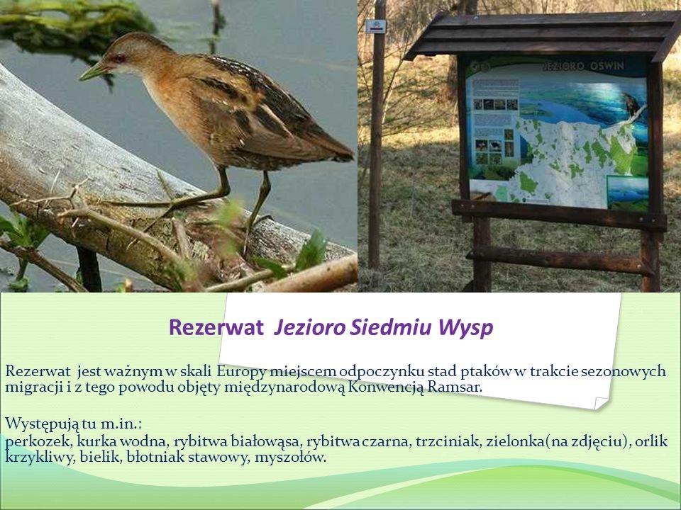 Rezerwat Jezioro Siedmiu Wysp Rezerwat jest ważnym w skali Europy miejscem odpoczynku stad ptaków w trakcie sezonowych migracji i z tego powodu objęty