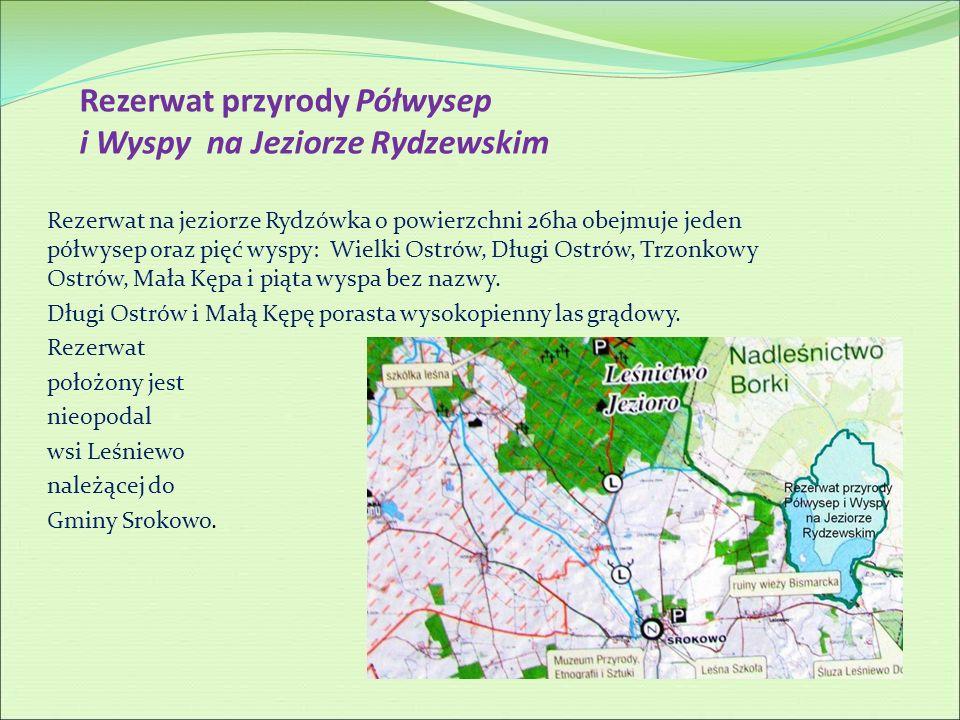 Rezerwat przyrody Półwysep i Wyspy na Jeziorze Rydzewskim Rezerwat na jeziorze Rydzówka o powierzchni 26ha obejmuje jeden półwysep oraz pięć wyspy: Wi