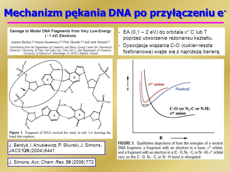 Mechanizm pękania DNA po przyłączeniu e - -EA (0,1 – 2 eV) do orbitala π * C lub T poprzez utworzenie rezonansu kształtu.