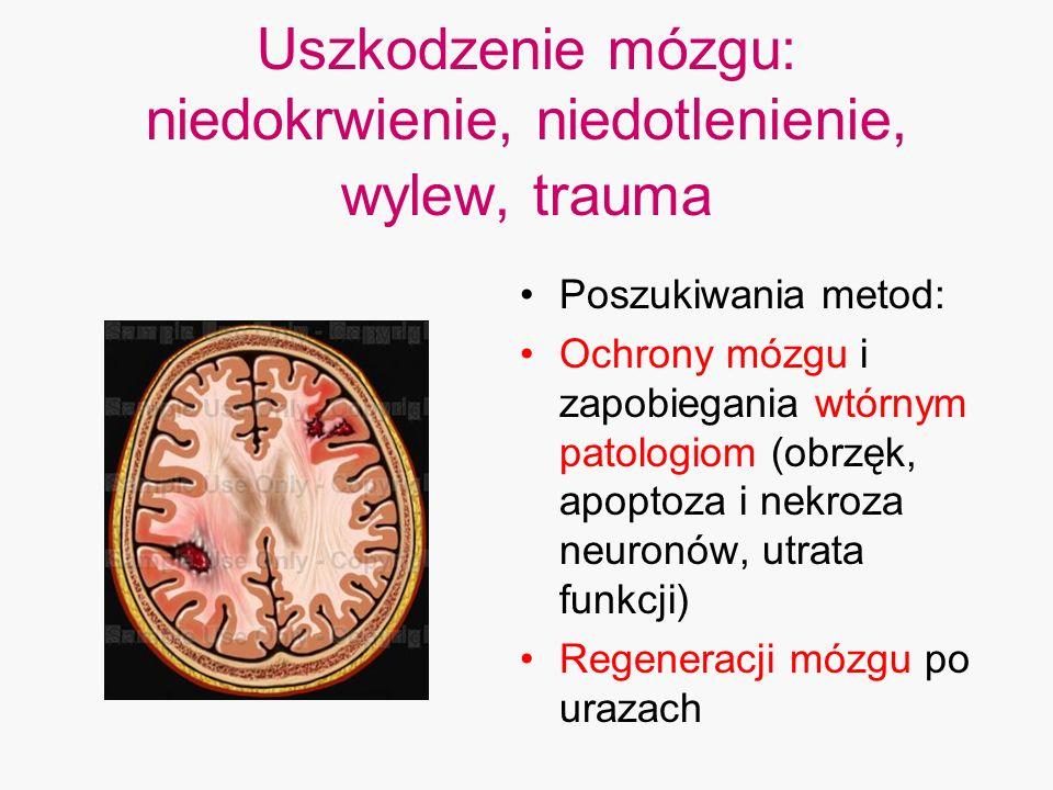 Uszkodzenie mózgu: niedokrwienie, niedotlenienie, wylew, trauma Poszukiwania metod: Ochrony mózgu i zapobiegania wtórnym patologiom (obrzęk, apoptoza
