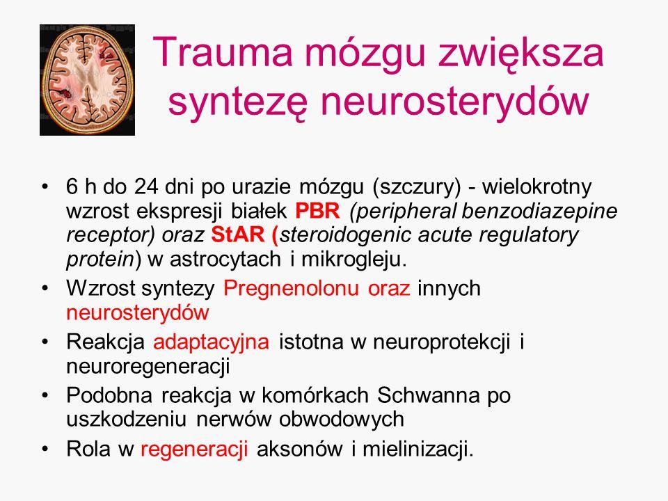 Trauma mózgu zwiększa syntezę neurosterydów 6 h do 24 dni po urazie mózgu (szczury) - wielokrotny wzrost ekspresji białek PBR (peripheral benzodiazepi