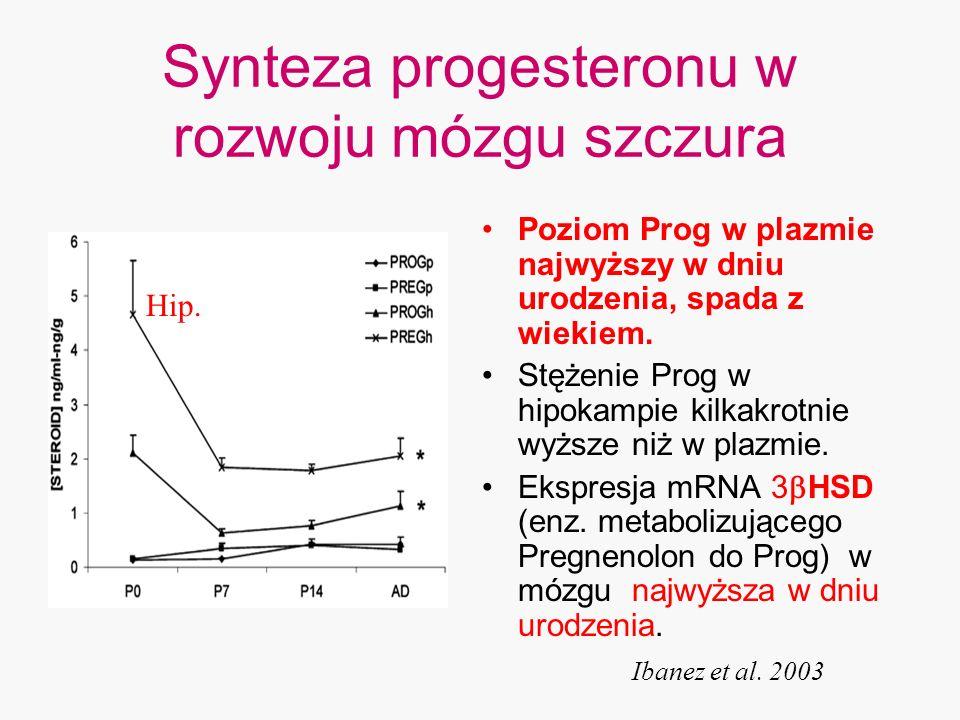 Synteza progesteronu w rozwoju mózgu szczura Poziom Prog w plazmie najwyższy w dniu urodzenia, spada z wiekiem. Stężenie Prog w hipokampie kilkakrotni