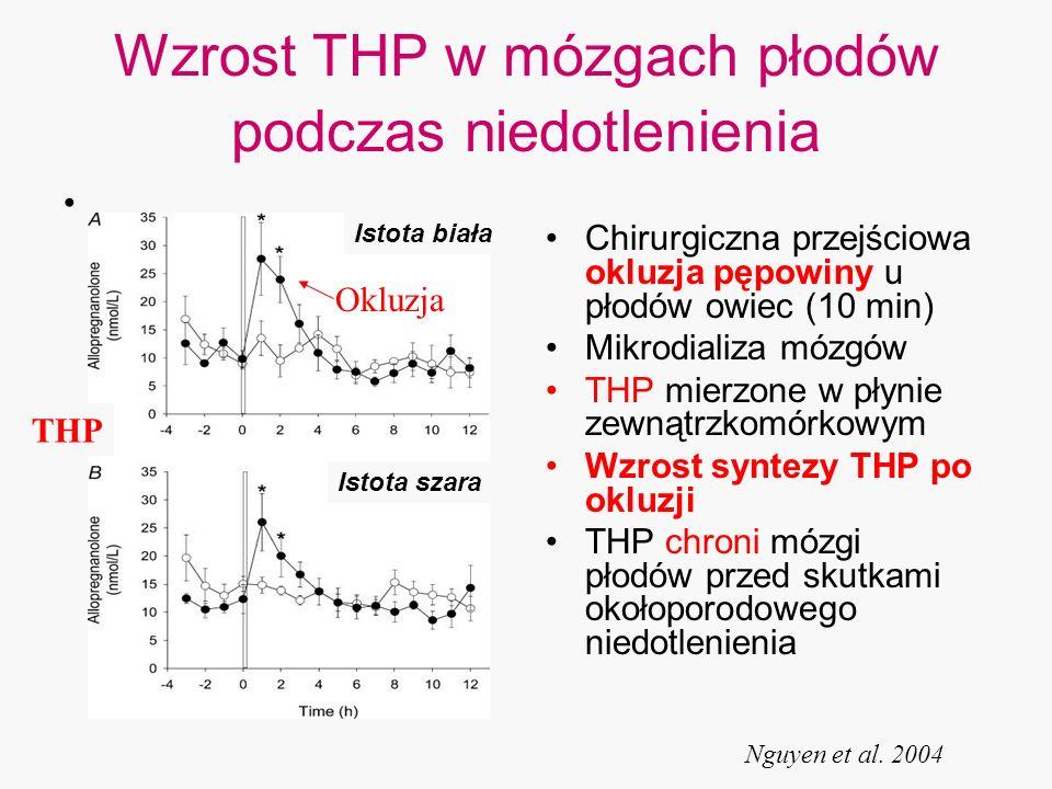 Wzrost THP w mózgach płodów podczas niedotlenienia Chirurgiczna przejściowa okluzja pępowiny u płodów owiec (10 min) Mikrodializa mózgów THP mierzone