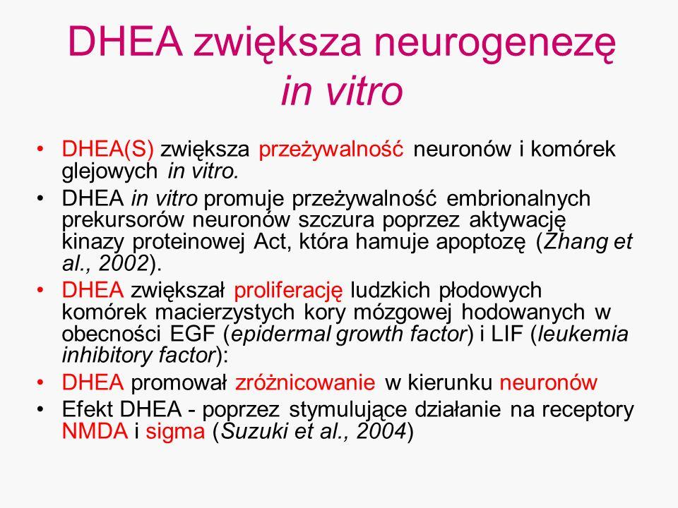 DHEA zwiększa neurogenezę in vitro DHEA(S) zwiększa przeżywalność neuronów i komórek glejowych in vitro. DHEA in vitro promuje przeżywalność embrional
