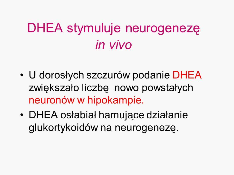 DHEA stymuluje neurogenezę in vivo U dorosłych szczurów podanie DHEA zwiększało liczbę nowo powstałych neuronów w hipokampie. DHEA osłabiał hamujące d