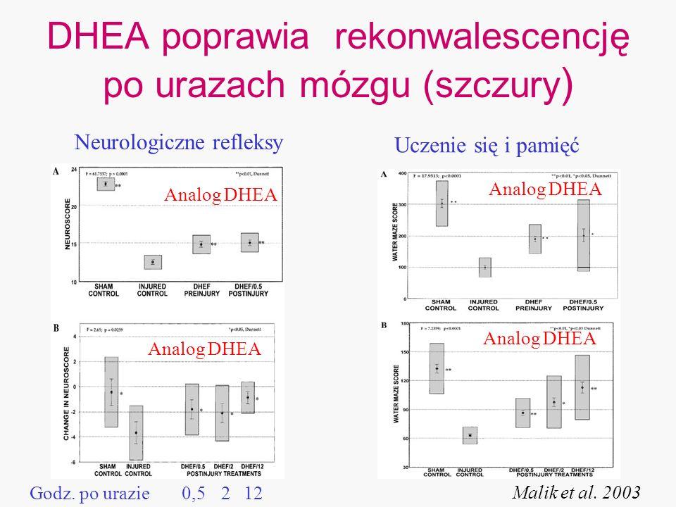 DHEA poprawia rekonwalescencję po urazach mózgu (szczury ) Neurologiczne refleksy Uczenie się i pamięć Malik et al. 2003 Analog DHEA Godz. po urazie A